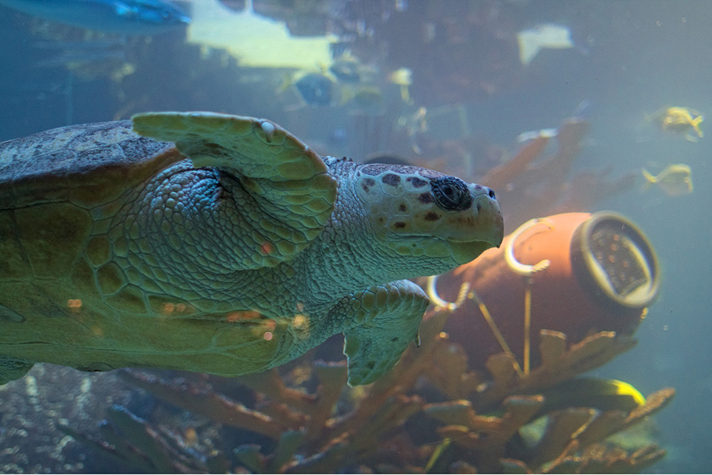 Can Turtles Live With Fish and Other Turtles