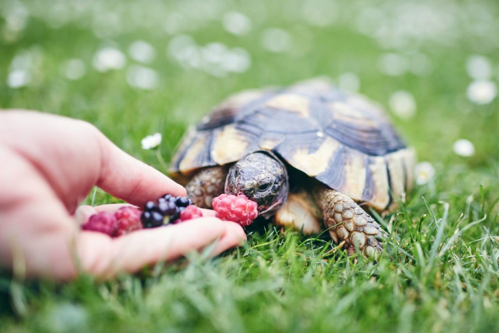 How to Feed Your Turtle