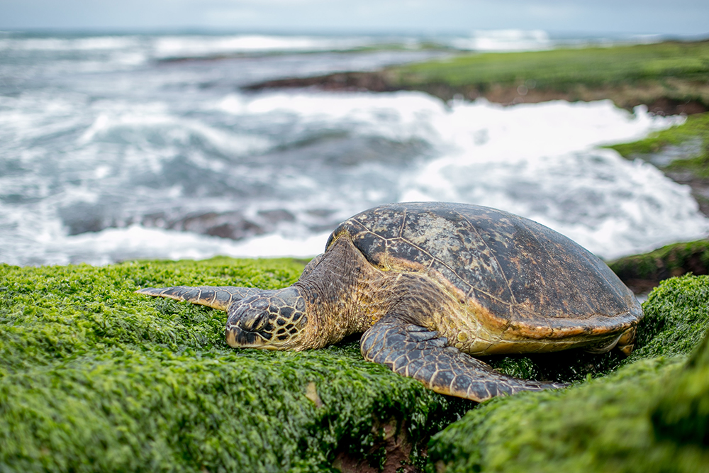See Turtle Sounds