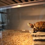 What's the Best Turtle Basking Light Wattage?