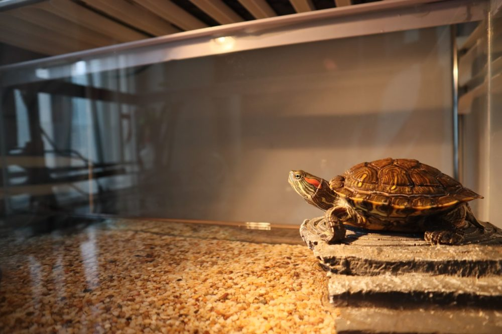 What's the Best Turtle Basking Light Wattage