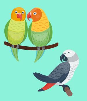 11. Birds