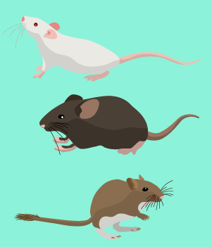 13. Mice and Rats