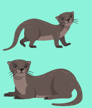 14. Ferrets