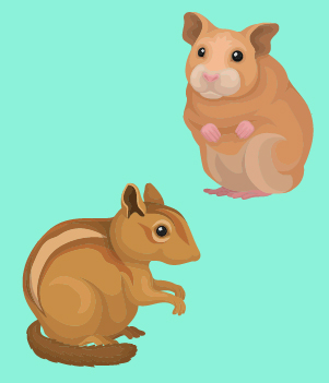 16. Hamsters and gerbils