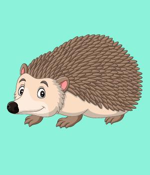 17. Hedgehogs