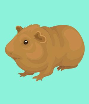 18. Guinea Pigs