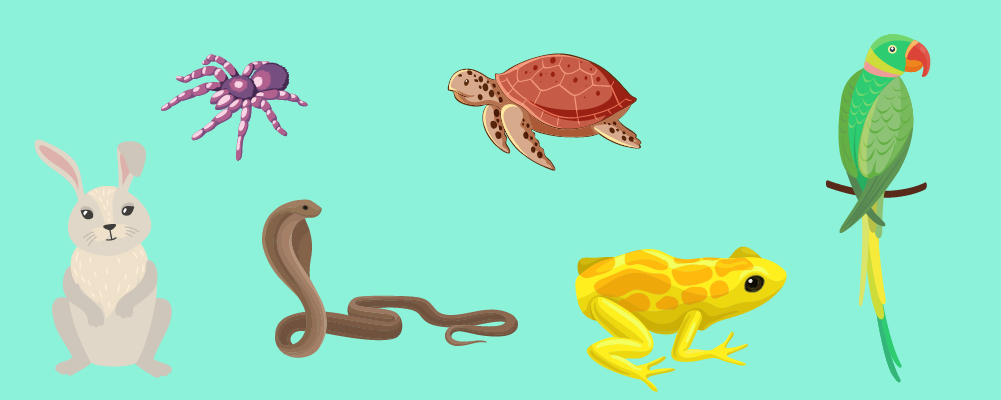4. What is Considered an Exotic Pet