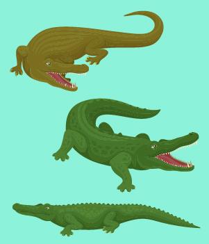 7. Crocodilians