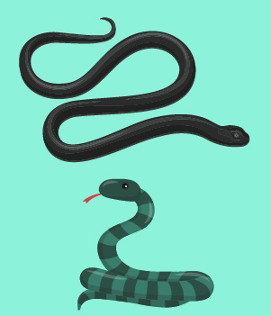 8. Snakes