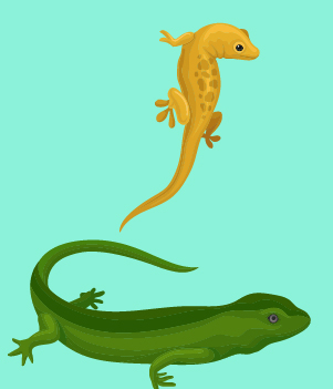 9. Lizards