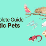 A Complete Guide to Exotic Pets